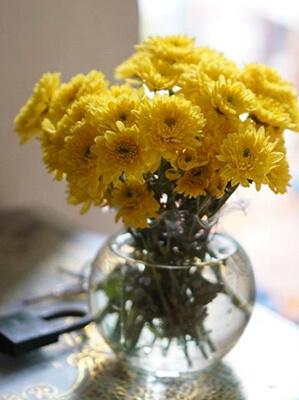 hoa cúc bàn thờ